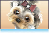 3d small dog picture: yorkshire terrier, maltese, model for animation